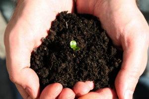 2016-04-20-1461183961-3932760-soilheldinhandswplantNatashatfreeimagesrbdcctw98.jpg